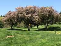Pine Brook CC